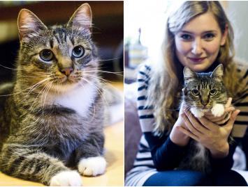 Neveislinis katinas – kaip auginti? Interviu su Brendžio šeimininke Erika