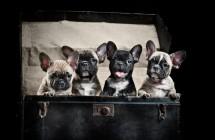 11 žmonių daromų dalykų, kurių šunys negali pakęsti