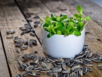 Daigai – maisto produktai ar vaistai?