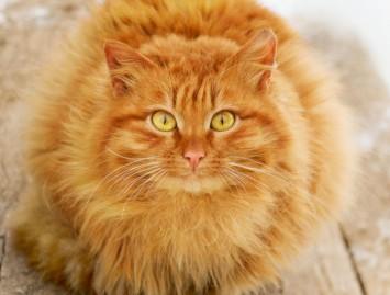 Ar jūsų katei reikia laikytis dietos?