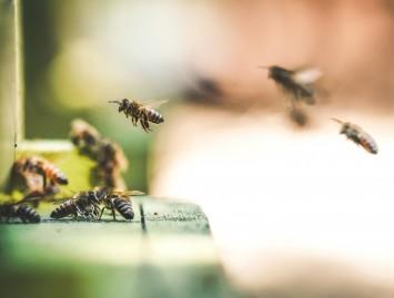 Bičių produktai – Jūsų sveikatai