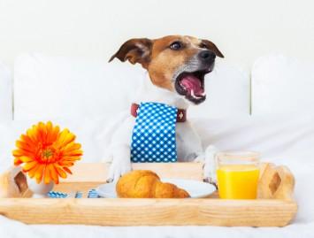 Šunų ir kačių viešbučiai – mada ar būtinybė?