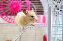 10 taisyklių, kaip tinkamai prižiūrėti žiurkėnus