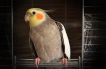 Neįtikėtina - alerginę slogą gali sukelti net paukščiai