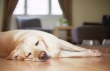 Kaip pastebėti, kad jūsų šuo serga?
