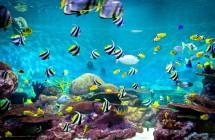 11 žingsnių, kaip įsirengti akvariumą.