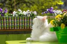 10 neįtikėtinų faktų kačių mylėtojams