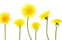 Pavasaris. Kaip gauti energijos iš gamtos?