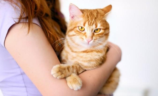 Katė, nėštumas ir toksoplazmozė
