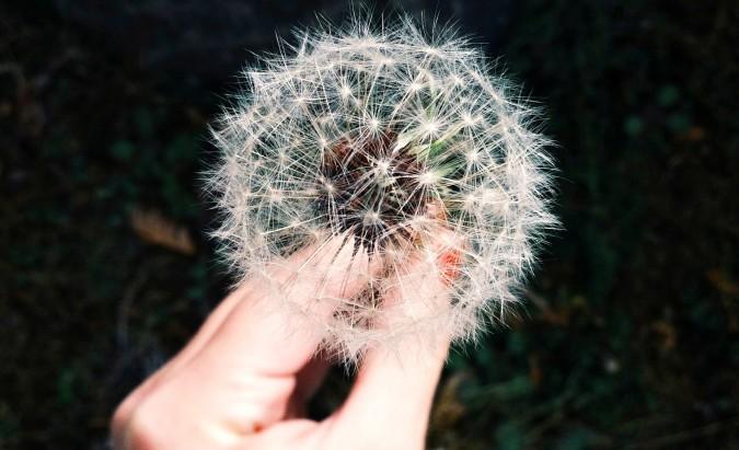 Patarimai, padedantys palengvinti arba išvengti augalų sukeliamų alergijų