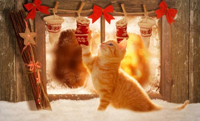 Mokslininkai suka galvas: kodėl katės murkia, o drugius traukia šviesa?