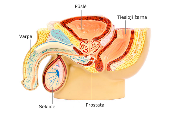 hipertenzija ir prostatos vėžys