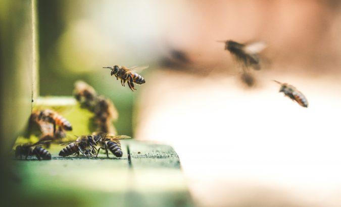 kaip vartoti bičių duoną sergant hipertenzija)