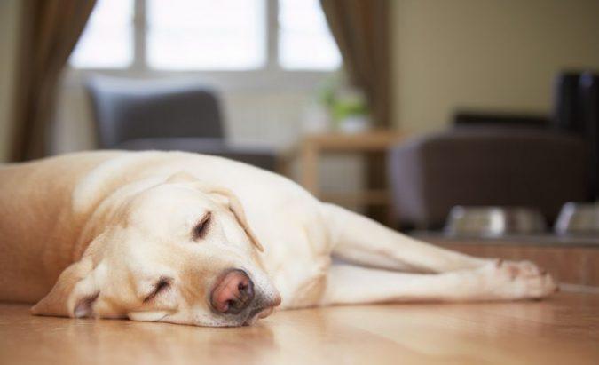 hipertenzija šunims simptomų gydymas