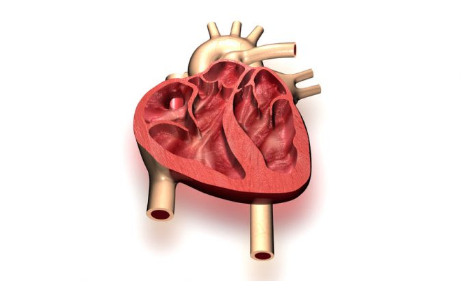 hipertenzijos insulto negalia)